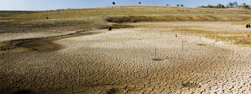 How to cope with stress from the drought